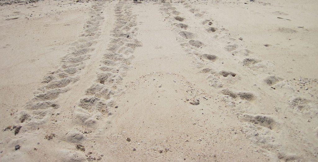 ウミガメの足跡